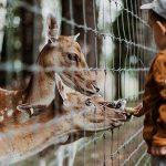 Formazione dell'infanzia, la natura attraverso la green education